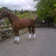 Aggie_horse_for_sale