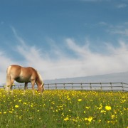 Shawfarm_Equestrian_Horses_field